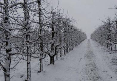 (Italiano) Bando Misura 5.2 Sostegno per investimenti per il ripristino di terreni agricoli e del potenziale produttivo agricolo danneggiato